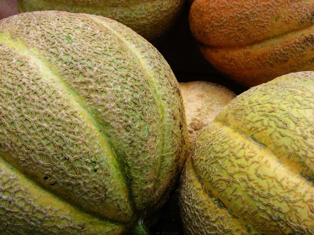melon20oka.jpg