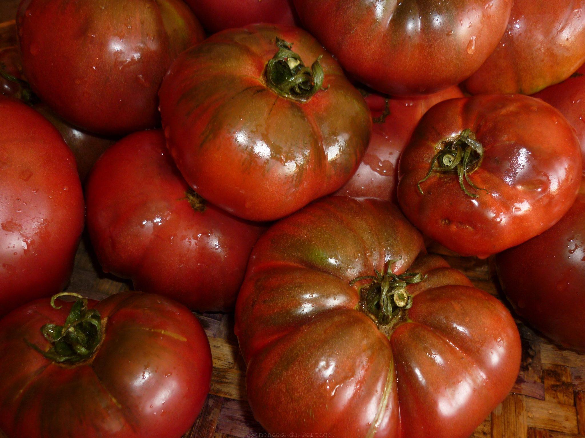 Tomate noire de crim e semences du portage - Noir de crimee ...
