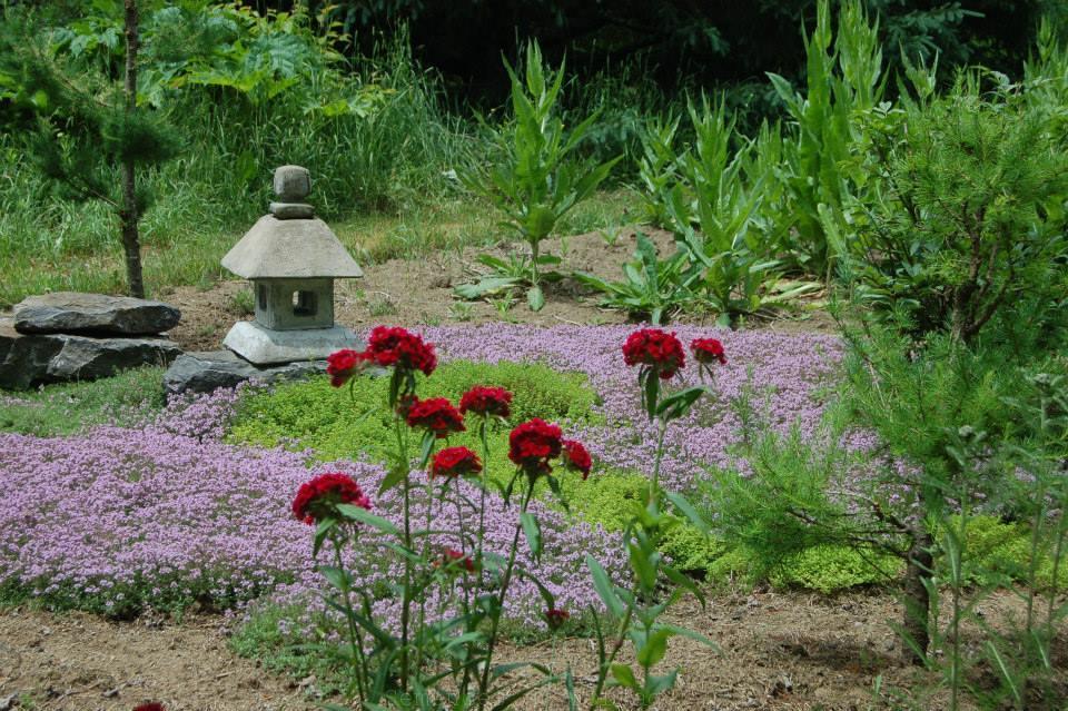Bienvenue sur notre boutique semences du portage for Grand jardin zen