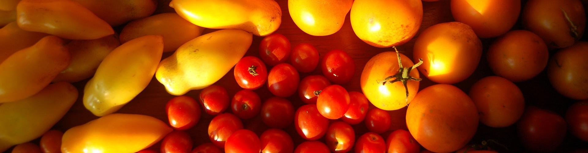 etale-tomates-1